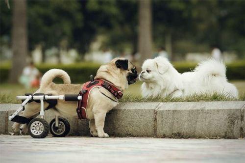 Веселая жизнь собачья