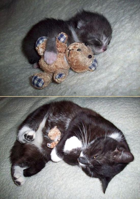 Животные раньше и сейчас