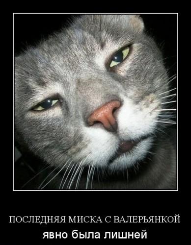 Сексуальные демотиваторы про котэ