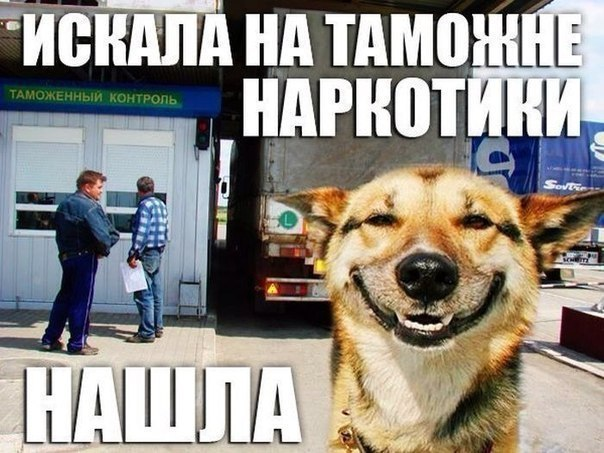 Собака-улыбака на таможне гуляка