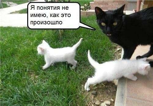 Прикольные картинки котов