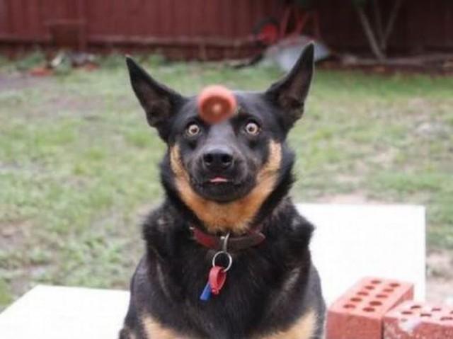 Самые смешные морды собак