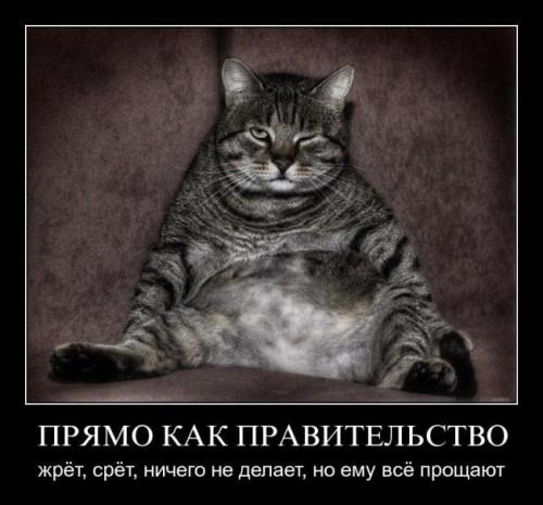 Демотиваторы про котов котэ котиков